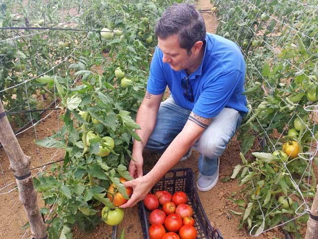 Tomates ecológicos de Larrauri